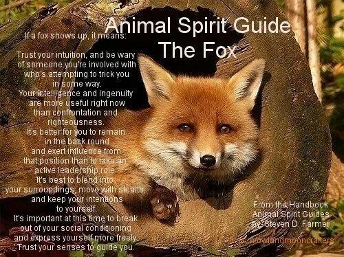 Heyokay, Fox, Scared Clown, Sacred Fool